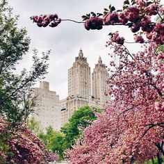 #NewYorkCity | The Art Deco Eldorado twin-towered apartments on Central park West, framed by spring blossoms in Central Park