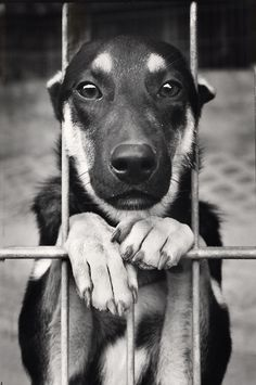Black & White Photography - Dog