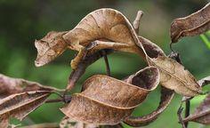Amazing natural camouflage - Sharenator.com