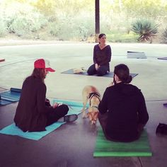 Do you Doga? Thats right, we have dog yoga at Dogs' Day in the Garden!