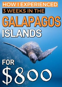Galapagos Islands travel tips. Heres how I spent just $800 in 3 weeks while in the Galapagos Islands. So whether youre traveling to the Galapagos Islands with kids, or just going alone, here are some great travel tips for you! #Galapagos #GalapagosIslands #BudgetTravel