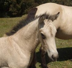Foal Page
