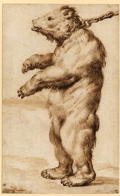 Carracci, Agostino (1557-1602) - A Chained Bear (Courtauld Institute of Art, London, UK)