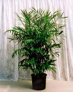 Low light house plants on pinterest low light plants low lights and wandering jew - Hardy office plants ...