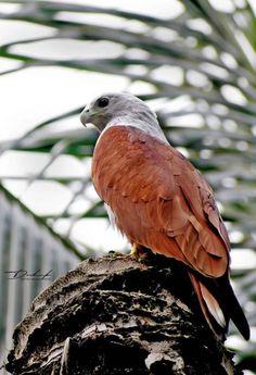 September, Bird, Animals, Animales, Animaux, Birds, Animal, Animais