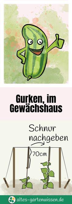 Die Gurke im Gewächshaus und die Kastengurken – Pflege, Pflanzung, und Tipps   altes-gartenwissen.de #garten #vegetables #nutzgarten #gemüsegarten