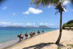1.5 hour Beach and Trail Riding in Paradise. Horse riding Nevis, Caribbean www.stable-mates.com