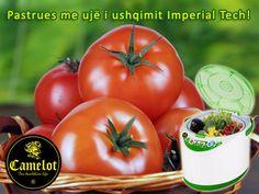 How to Cure Varicose Veins with the Help of Tomato Dieta Hcg, Dieta Paleo, Dieta Detox, Paleo Diet, Varicose Vein Remedy, Varicose Veins, Home Remedies, Natural Remedies, Health Benefits Of Tomatoes
