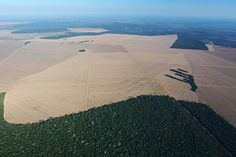 Like beef or soy? Brazil's crop is responsible for 30% of world deforestation pollution.