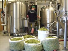 brewing hops - Google Search