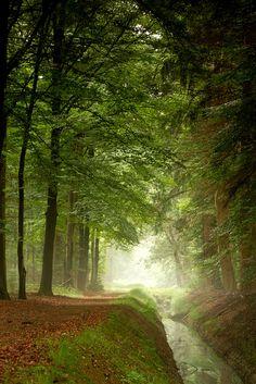Early summer Forest, Hardenberg, Netherlands