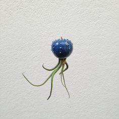 Cactopus piccolo vaso per tillandsia a forma di cactus per