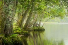 landscapelifescape:  Loch Ard, Trossachs, Scotland Loch Ard morning (by ouldm01)