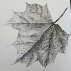 biro drawing of leaves - Google Search