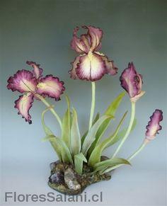 Lirios Iris morado. | Flores Salahi