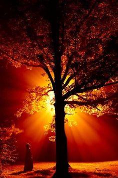 El árbol que da