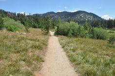 The Interpretive Loop: a 1.3 easy subalpine walk in Lake Tahoe, Incline Village