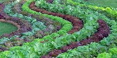 Beautiful Vegetable Gardens | vegetable gardens can be beautiful.