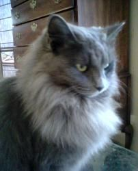 13 Best Kitties Images Cats Kitty Long Haired Cats