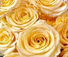 1000+ images about Beautiful flowers on We Heart It | See more about flowers, rose and pink Hair Mask For Growth, Beautiful Flowers, We Heart It, Peanut Butter, Exterior, Rose, Pink, Image, Outdoor Rooms