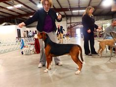 Dodge County Canine Club second annual UKC Dog Show