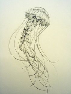 Tiffany Bozic. Jellyfish, 2005. Pencil. http://www.tiffanybozic.net/