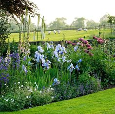 "thoughtsofengland: ""(via Clive Nichols Garden Photography) The Old Rectory, Haselbech, Northamptonshire Sheep may safely graze. Very pretty, softly planted border in hues of blues with foxgloves, iris and poppies, also i think, some foxtail lilies or delphiniums."