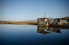 drake's oyster farm - Google Search