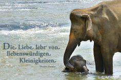 Elefantenmutter mit Kind. My #Quote of the day: Die Liebe lebt von liebenswürdigen Kleinigkeiten (Theodor Fontane) #LILAFANT