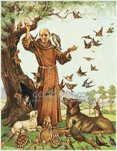 St. Francis                                                                                                                                                                                 Mais