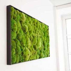 Moos Collage 50x160cmRecheckige Moosbilder aus konservierten Kugelmoos Moos…
