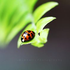 J m Kelly Photography