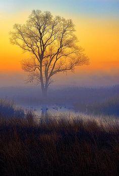 #Ducks at #Sunrise