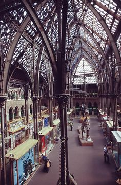 The Oxford University Museum of Natural History by jacqueline.poggi, via Flickr