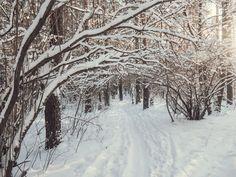 Снежный лес  Winter woods