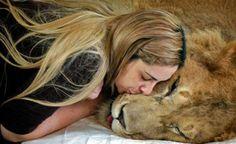 Lion kisses