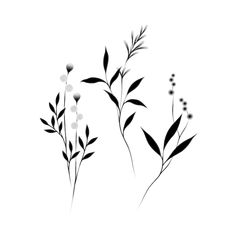 Botanicals by Lara Maju from Tattly Temporary Tattoos to make temporary tattoo crafts ink tattoo tattoo diy tattoo stickers Fake Tattoos, Wrist Tattoos, Mini Tattoos, New Tattoos, Small Tattoos, Cool Tattoos, Shoulder Tattoos, Awesome Tattoos, Fake Skin Tattoo
