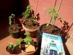 Anna (Sabadell) #39 Planter Pots, Anna
