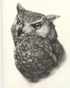 Realistic Drawings - Self-employed artist Vanessa Foley has created the collection of awesome realistic sketches of birds below. She is currently based in Newcastle, England and her work has been featured in galleries in America, New Zealand and the UK. Realistic Animal Drawings, Cool Pencil Drawings, Realistic Sketch, Owl Tattoo Drawings, Bird Drawings, Owl Tattoos, Buho Tattoo, Owl Sketch, Scratchboard Art