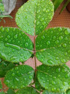 Rain & leafs