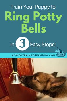 New puppy? Sick of accidents in the house? Use these 3 easy to follow steps to train your puppy to ring bells when they need to go outside.  #puppy #dogtraining #pottytraining