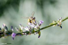 Olhares.com Fotografia | Gabriel Viana | Take off