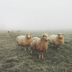 #wales is famous for its love and vast amount of sheep