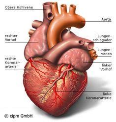 Herz Menschen