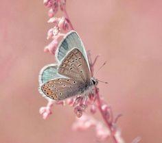 <3 <3 <3 Butterfly mmm <3 <3 <3