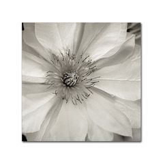 "Trademark Art 'Florison XXXII' Photographic Print on Wrapped Canvas Size: 14"" H x 14"" W x 2"" D"
