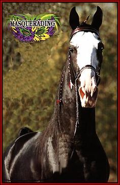 Tennessee Walking horse - Masquerading #911509/BR home page by Walkers West