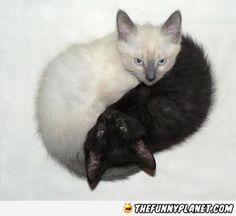 Its Yin And Yang!