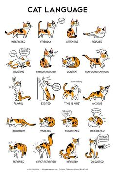 18 Reason Why Cats Talking To You So Much #catlanguage #cattalking - Catsincare.com!