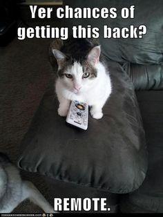 #Iprefercats